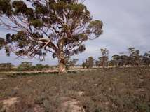 Lot 14 Korbrelkulling Road, Merredin